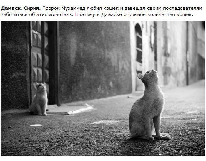 Из истории кошек