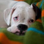 Берегите здоровье щенка